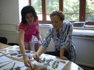 "Proiect Grundtving ""Les langages du vegetal en Europe"""